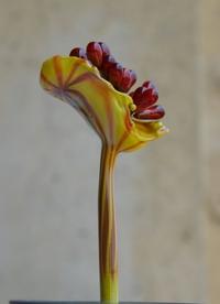 4_fleur_souffle_cadre_w_5